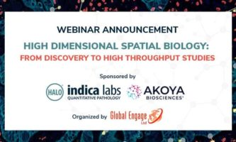 High Dimensional Spatial Biology: from Discovery to High Throughput Studies