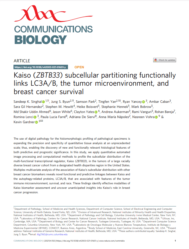 Kaiso (ZBTB33) subcellular partitioning functionally links LC3A/B, the tumor microenvironment, and breast cancer survival
