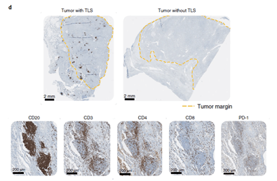 An ex vivo tumor fragment platform to dissect response to PD-1 blockade in cancer